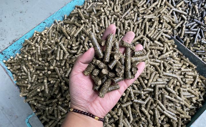 在原料存储区,工人将粉碎成大块木渣投入传送带,输送至一旁的生产区。在生产区,经二次粉碎和生物质燃料颗粒机挤压后,小木渣变成了一节节铅笔粗细的生物质燃料颗粒